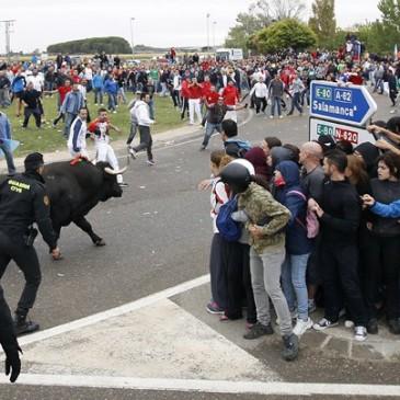 Abogados de Málaga denunciarán que el Toro de la Vega «incumple» la ley.»IFS ABOGADOS IRÁ A LA EUROCAMARA PARA DENUNCIAR ESTOS HECHOS»