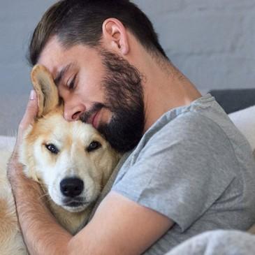 Sentencia contra el acoso online a una clínica veterinaria